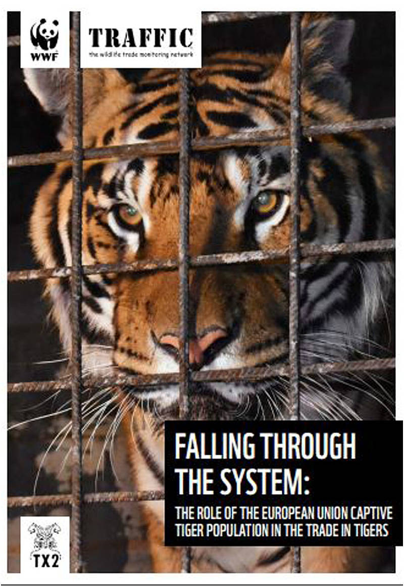 Portada informe _ The role of the European Union Captive tiger population in the trade in tigers