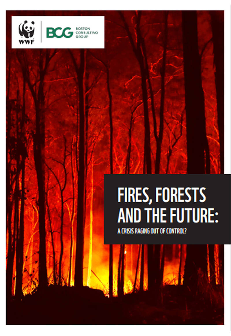 Informe Fires, Forest and the future